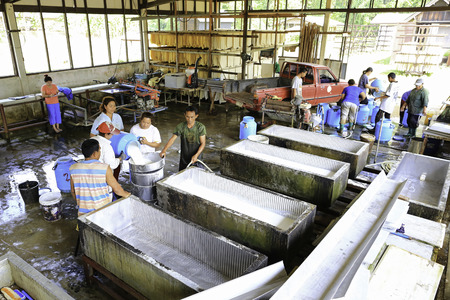 tapper: KRABI, THAILAND - FEBRUARY 9   Local rubber farmers pour rubber latex collected from rubber trees into a processing tanks at a collection centre on February 9, 2014 in Krabi, Thailand  Editorial