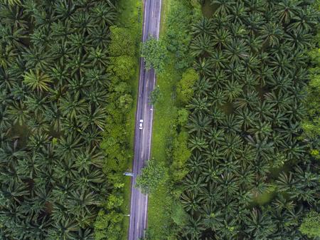 Top Blick auf ländliche Straße durch Palme Wälder