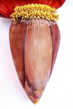 Banana blossom which is perfect for a woman who had just given birth  photo