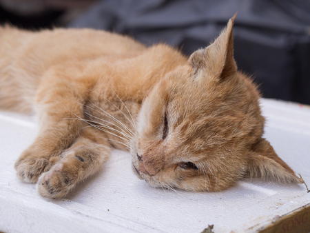 One illness dead cat on street