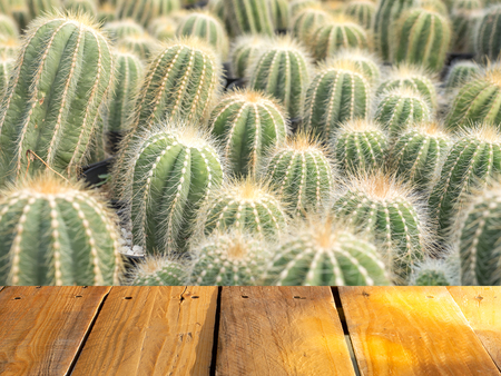 Wood table or terrace with full of cactus garden background. Free space.