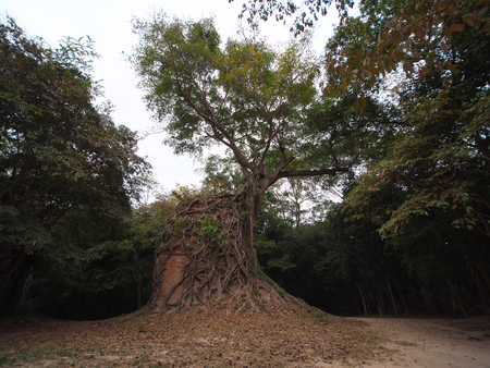 Sambor Prei Kuk is an archaeological site in Cambodia. It dates from the 7th century.