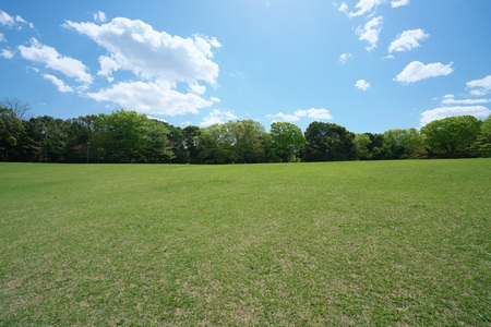 Tokyo, Japan-April 8, 2018: Green lawn surrounded by trees in park on a sunny spring morning.