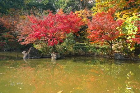 A Japanese garden in early winter in Tokyo