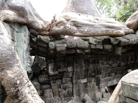 Damaged buildings at Ta Prohm Temple in Siem Reap. Most roots were not covered or protected yet on year 2008.
