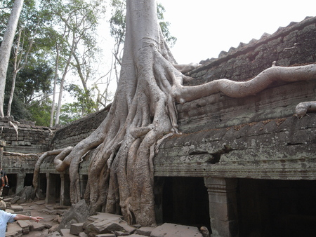 Siem Reap, Cambodia-March 9, 2008: Damaged buildings at Ta Prohm Temple in Siem Reap. Most roots were not covered or protected yet on year 2008. 写真素材