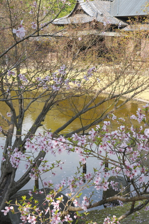Tokyo, Japan-March 27, 2019: Cherry blossom began to flutter down in Tokyo, Japan Stok Fotoğraf - 124716488