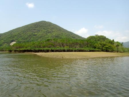 Amami Oshima, Japan-April 8, 2019: Mangrove virgin forest in Amamigunto National Park, Amami Oshima, Kagoshima, Japan Stok Fotoğraf - 124716685