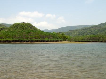 Amami Oshima, Japan-April 8, 2019: Mangrove virgin forest in Amamigunto National Park, Amami Oshima, Kagoshima, Japan Stok Fotoğraf - 124716686
