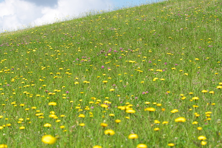 Tokyo, Japan-May 19, 2019: Meadow on a hillsTokyo, Japan-May 19, 2019: Meadow on a hillside in early summeride in early Summ Er Stok Fotoğraf