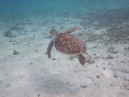 Amami Oshima, Japan - June 17, 2019: Sea turtle near Kasari Fishing Port at AAmami Oshima, Japan - June 17, 2019: Sea turt le near Kasari Fishing Port at Amami Oshima, Kagoshima, Japanmami Oshima, Kagoshima, Japan Stock Photo