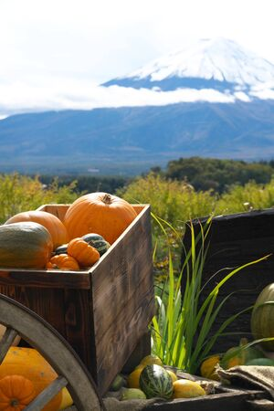 Yamanashi,Japan-October 26, 2019: Halloween Pumpkins along Lake With Mt. Fuji Background 写真素材 - 132727924