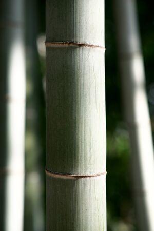 竹 写真素材 - 133188258