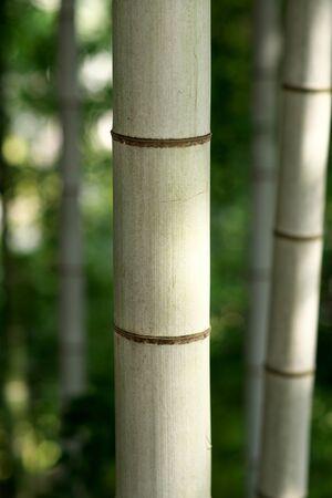 竹 写真素材 - 133188259