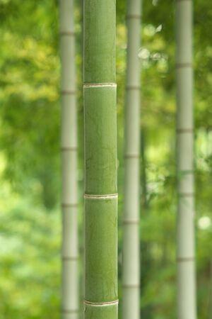 bamboo 写真素材