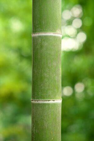 竹 写真素材 - 133188374