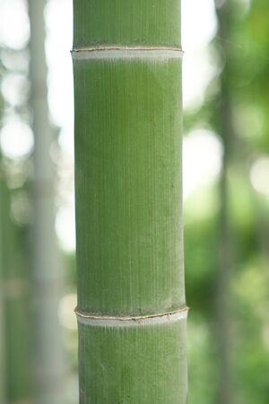 竹 写真素材 - 133188373