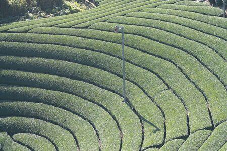 Kyoto,Japan-November 15, 2019: Beautiful Round Tea fields at Harayama in Wazuka, Uji, Kyoto
