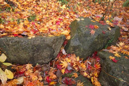 Gunma,Japan-November 23,2019: Beautiuful autumn leaves fell on the rock and the earth in the rain in Japan 写真素材 - 134201608