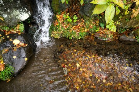 Gunma,Japan-November 23,2019: Beautiuful autumn leaves fell on the rock and the earth in the rain in Japan