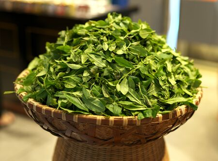 Shanghai,China-September 15, 2019: Pile of Green tea leaves at a tea shop in Shanghai