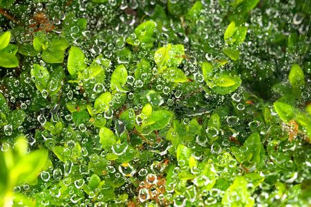 Tokyo, Japan-May 22, 2020: Clear raindrops on spider's web
