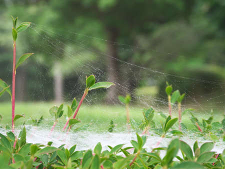 Three Dimensional Spider's Web After the Rain