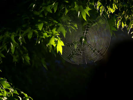 Tokyo,Japan-July 12, 2020: A wide spider's web under the tree in the night Banco de Imagens