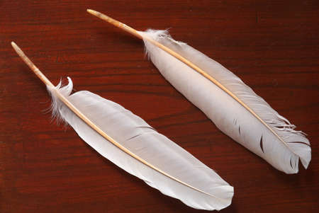 Niigata,Japan-October 20,2020: Feather of Toki or Japanese crested ibis or Nipponia nippon in Sado island 写真素材