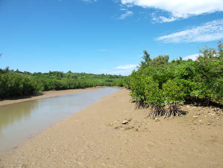 Shimajiri mangrove forest in Miyakojima island 写真素材