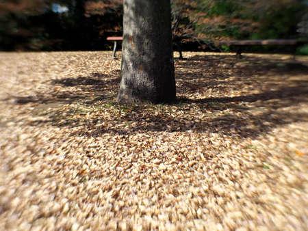 Tokyo,Japan-November 14, 2020: (Deep Bokeh) Stacked Fallen Leaves around a tree