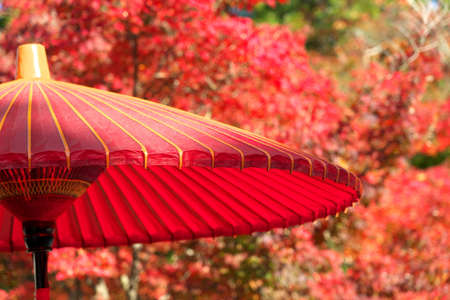 Kyoto,Japan-November 15,2020: A Japanese red umbrella with beautiful red autumn leaves