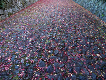 Kyoto,Japan-November 19,2020: Autumn leaves stacked on a slope in the morning