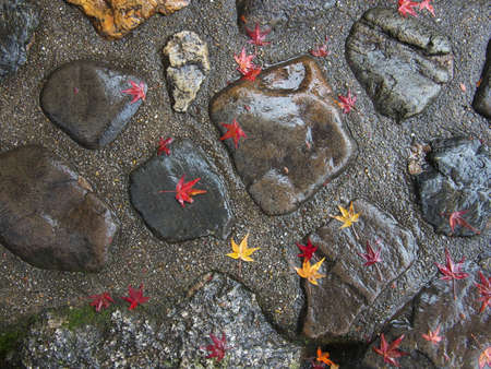 Kyoto,Japan-November 20,2020: Wet autumn leaves on a stone in the rain 写真素材