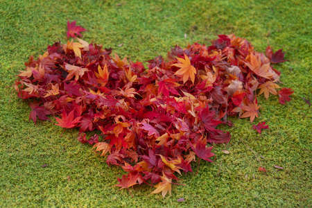 Kyoto,Japan-November 18,2020: Heart-shaped autumn leaves stacked on moss