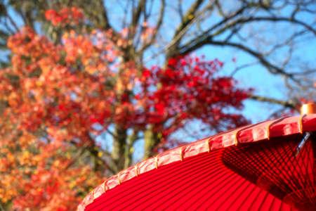 Kyoto,Japan-November 24,2020: A Japanese tradition red bamboo-and-paper umbrella or Karakasa or Bankasa with blue sky and autumn leaves background 写真素材