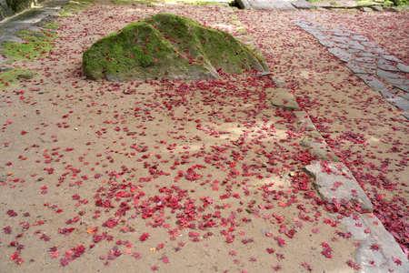 Nara,Japan-November 16, 2020: Scattered autumn leaves on soil