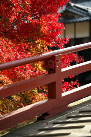Nara,Japan-November 16, 2020: Red autumn leaves by an arched bridge