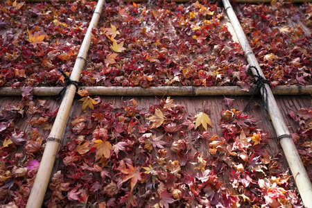 Kyoto,Japan-November 18, 2020: Stacked autumn leaves on a roof in Kyoto