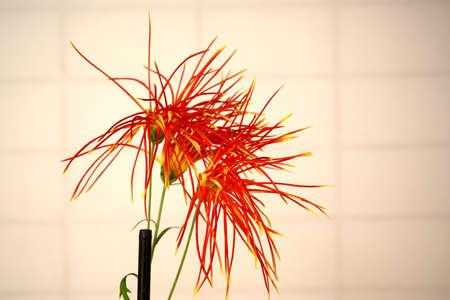 Kyoto,Japan-November 22, 2020: Closeup of Sagagiku chrysanthemum, Japan native flower 写真素材