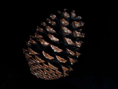Closeup of big pine cone  on black background 写真素材