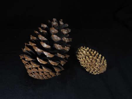 Closeup of  pine cones on black background