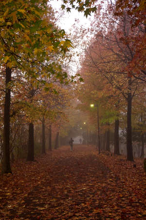 Tokyo,Japan-November 18, 2015: Foggy path in autumn in Tokyo