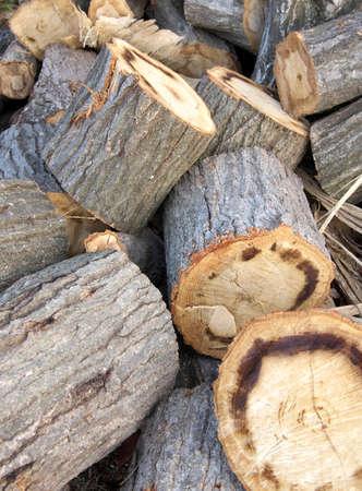 Logs of Quercus serrata or jolcham oak