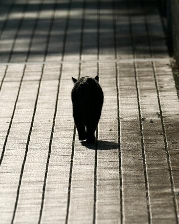 shot of walking black cat's back Фото со стока