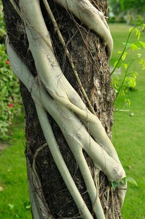 pervasive: parasite plant on tree
