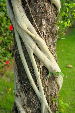 strangler: Parasite roots