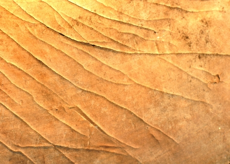 Bark texture background photo