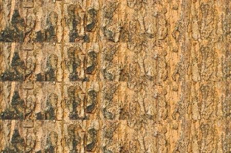 Old bark tree texture background photo