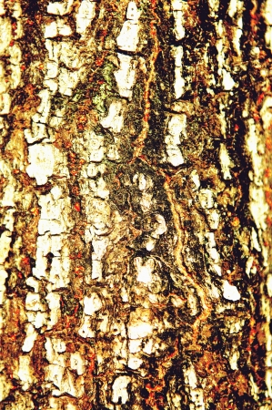 Bark abstract texture background photo